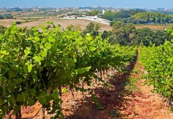 Le Oeste circuit du vin
